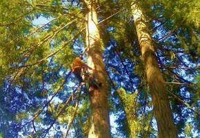 ALPHA TREE CARE