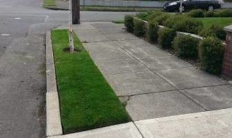 Steve Roods Lawn care. Quality Lawn & Yard care since 1989