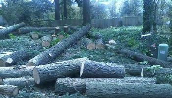TREE REMOVAL & TRIMMING & STUMP GRINDING