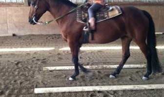 Horse Riding Lessons - Indoor Arena! Amethyst Performance Horses