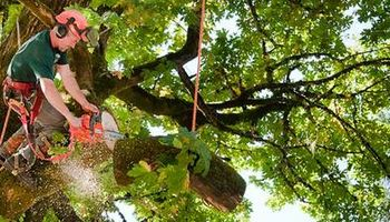 Reliable Tree Service. Call 24x7 EMERGENCY STORM DAMAGE
