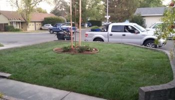 JDB's Custom Landscaper - Yard Clean up, Hauling, Waste Removal