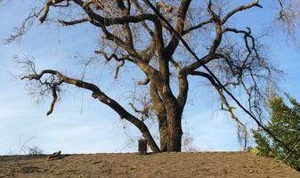 BIG CLEAN UPS HAULING, YARD & TREE WORK