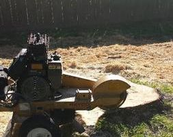 Stump Grinding Special! For as low as $50