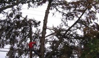 ROD'S TREE SERVICE - LICENSE # 679609