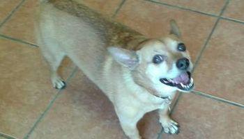 Pet Sitting/Dog Walking; Expr. Vet Tech