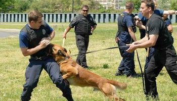 CANINE TRAINING SOLUTIONS