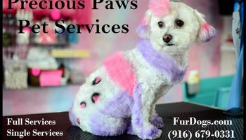 Precious Paws Pet Services - Dog Grooming