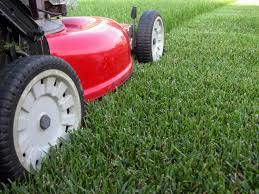 Lawn Service, Edging, Blowing