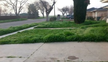 Lawn Service - cutting, edging and clean up