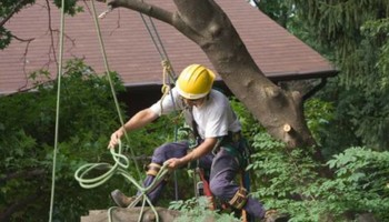 Fresno Tree Services: Neighboorhood Tree Man