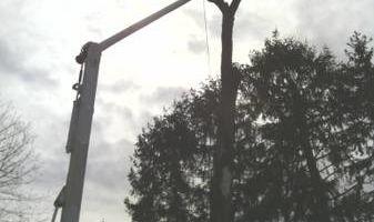 Tree removal. Tree service. Tree care