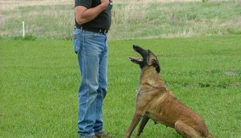 K-9 Masters Dog Academy. Dog Training