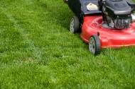 Lawn and Landscaping and Gutter Cleaning