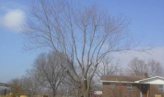 Experienced tree care and removal
