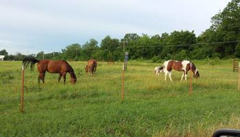 Horse Boarding (Prattville)