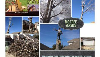 MG Tree Services. EXPERTS ON TREE REMOVAL
