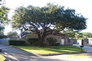 Najera Tree Service. Super cheap prices!