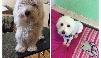 SHAGGY'S SPA :) dog grooming
