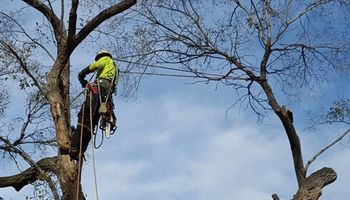 Tree Trimming & Removal, Rigging