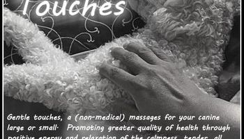 Gentle Touches - massages for canine