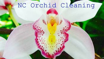 NC Orchid Cleaning