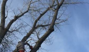 Rugged Cross Tree Service
