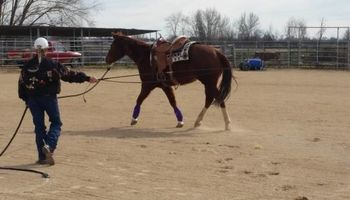 Do you love horses? Want to learn to ride?