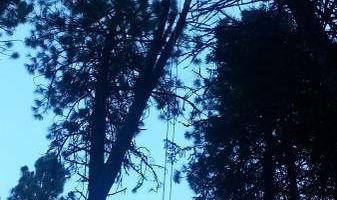 City of Treez Tree Service LLC