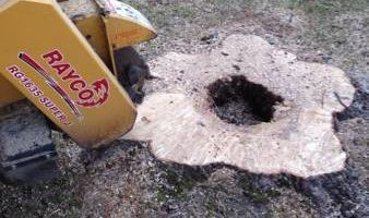 Tree/Shrub and Landscaping Removal, Stump Grinding
