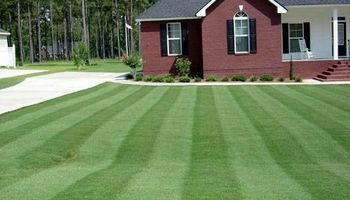 Reasonable grass cutting/yard cleanup