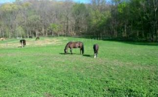 Horse Boarding - No Training Package Required - Wildwood Farm