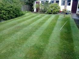 Michale's Lawn care