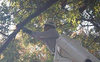 Noel's tree removal service licensed and insured free estimate