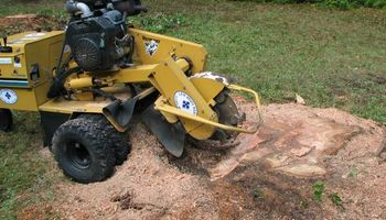 Northland and Eastern Stump removal / Stump grinding