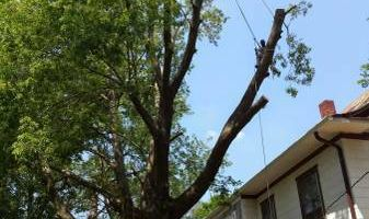 TREE TRIMMING AND REMOVAL. FREE ESTIMATES. AFFORDABLE PRICING!