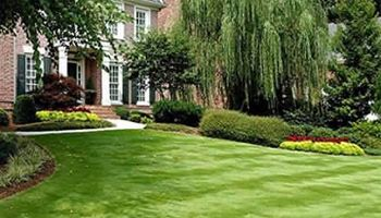 Waldo & Brookside Lawn Care Service Starting at $20