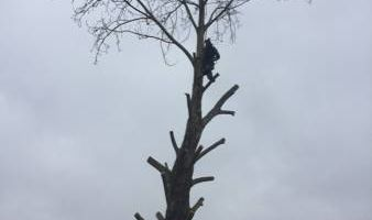 Tree And Limb Triming Work