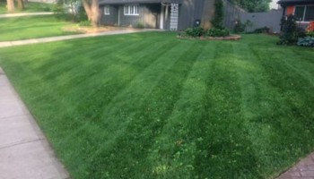 JOCO Affordable Lawn Care - Great Service - No Contracts