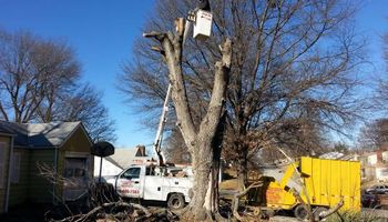 GET YOUR TREES TRIMMED OR REMOVED! NO JOB TO SMALL!