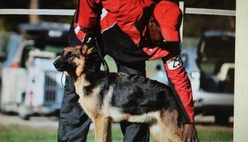 Brelsford's K9 Academy. Dog Training/Boarding