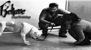 Kinda like super nanny for your dog! Dog Trainer