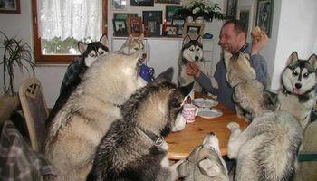 Fairplay Pet Care
