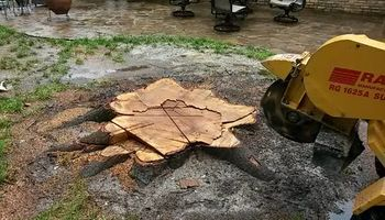 Stump Grinding Service LOW COST