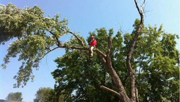 Jake's Top Notch Tree Service LLC