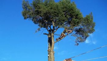 PITTSBURGH AREA TREE SERVICE