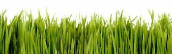 Grass by Greg