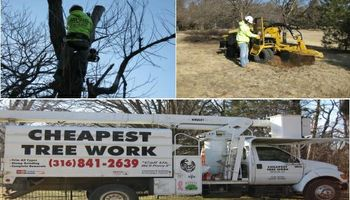 Cheapest Tree Work - Tree Removal or Stump Grinding