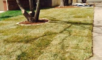 Extra Sod by WICHITA MOWING & LANDSCAPES