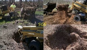 Stump Grinding Services. Affordable and Professional